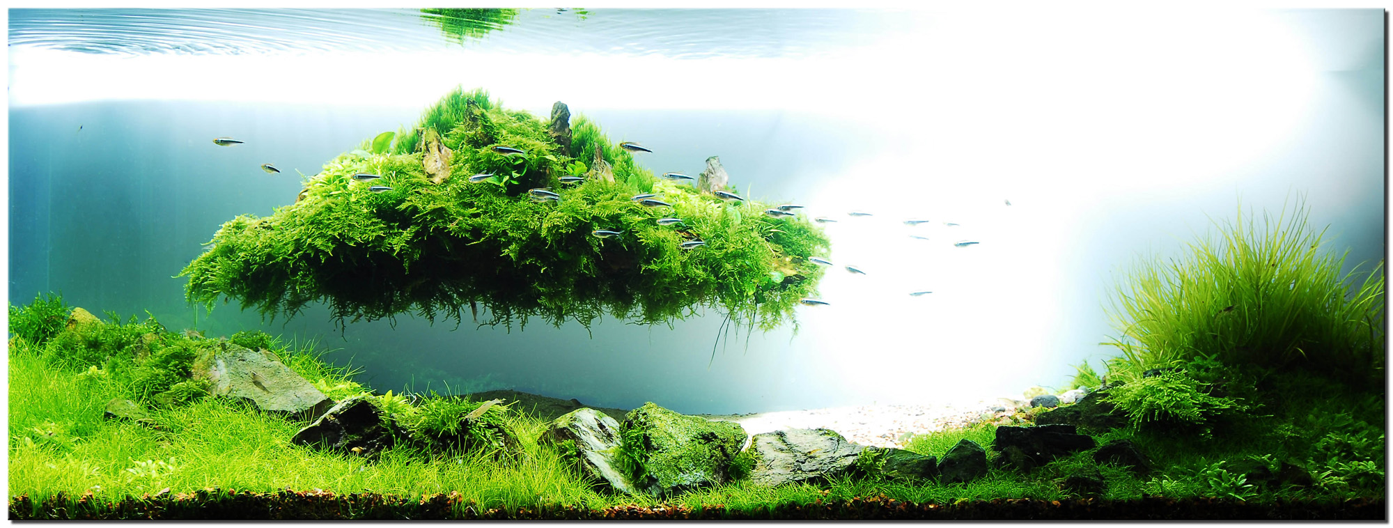 The Art of Aquascaping | Joe Blogs