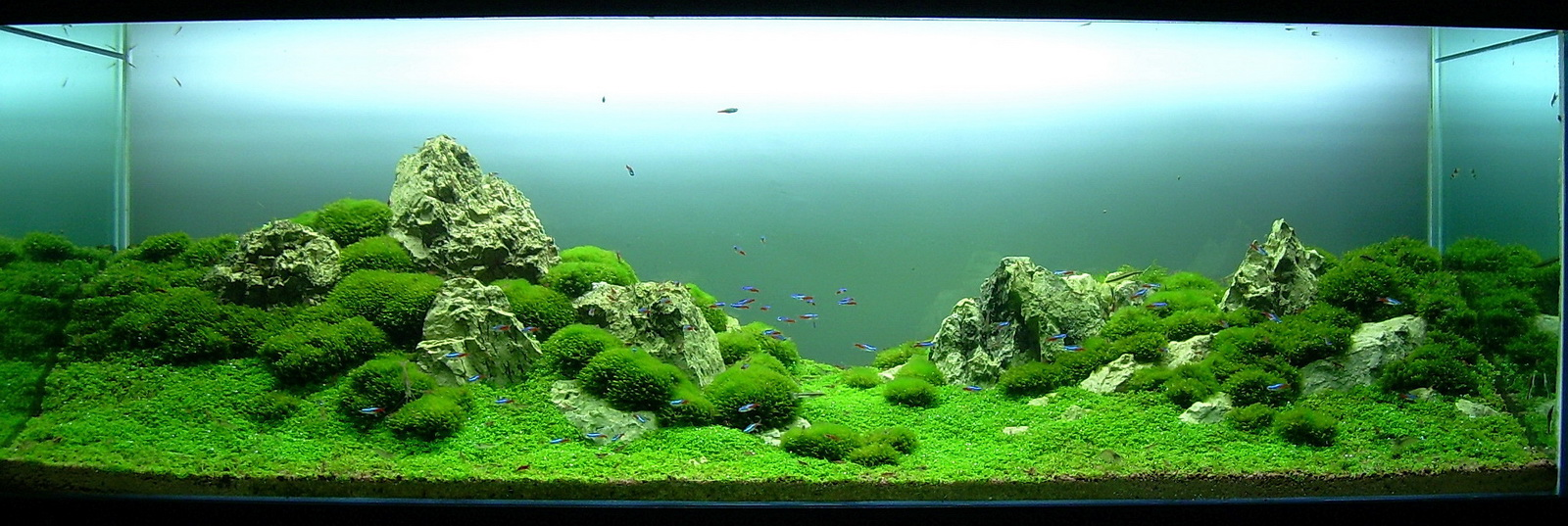 Takashi amano joe blogs - Aquascape espana ...