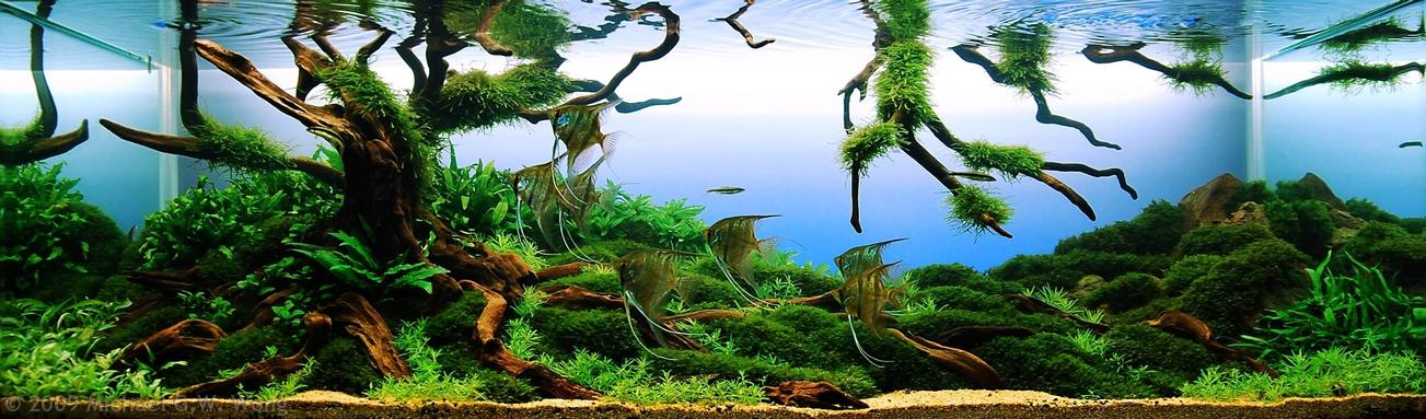 The Art Of Aquascaping Joe Blogs