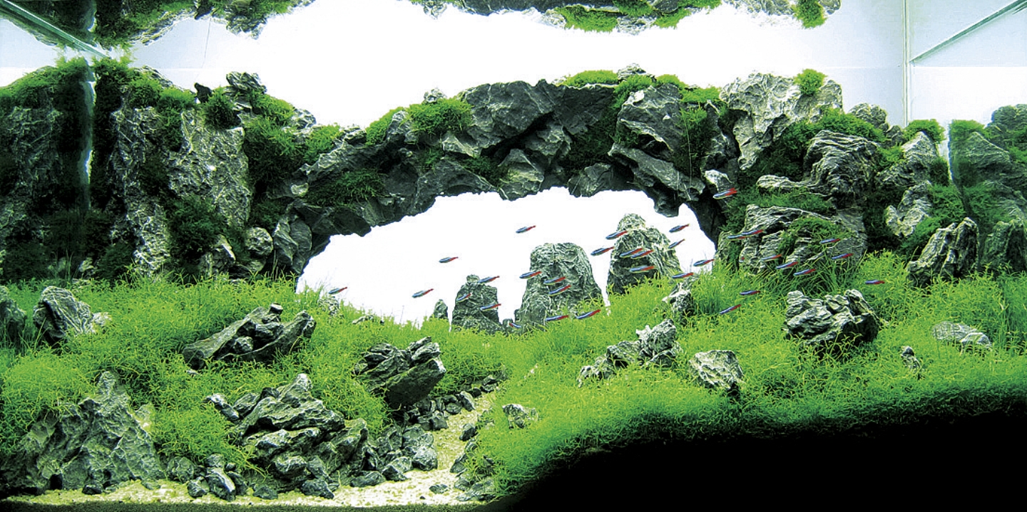 Takashi amano joe blogs - Design aquasacpe ...