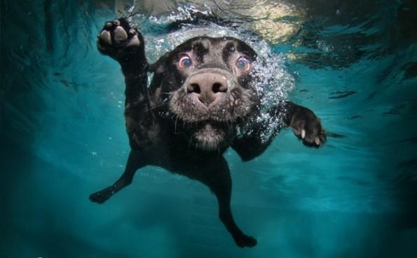 seth-casteel-underwater-dogs-3