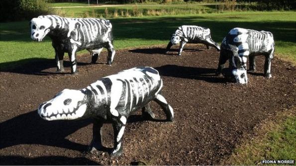 mk-cows