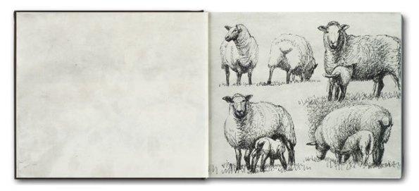 Moore sheep