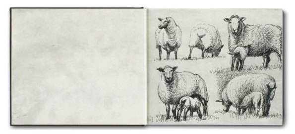 Moore sheep
